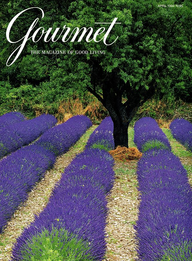 A Gourmet Cover Of A Lavender Field Photograph by Julian Nieman