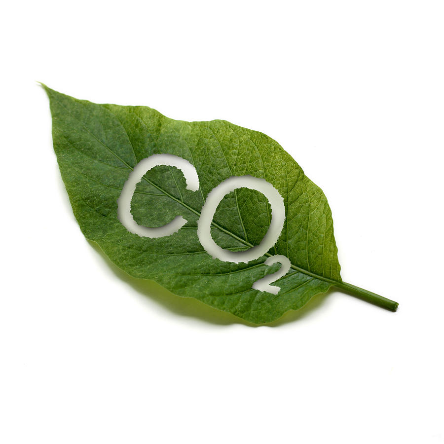 A Green Leaf With Co2 Written On It Photograph by Christiangrass