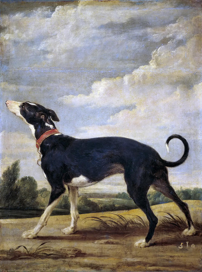 Paul De Vos Painting - A Greyhound Lurking by Paul de Vos