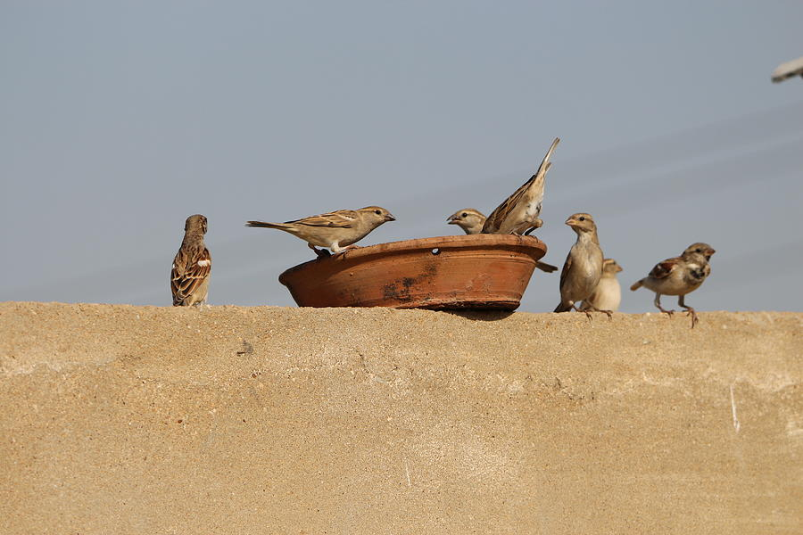 A Group Of Birds In Meal Digital Art by Ibrahim Albalushi