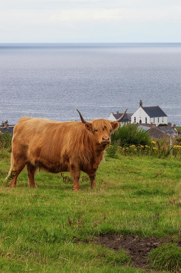 A Highland Cow Photograph by Diane Macdonald