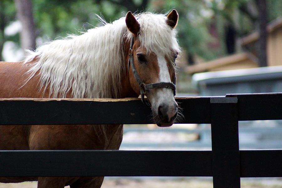 Hilton Head Island Horse Photograph - A Hilton Head Island Horse by Kim Pate