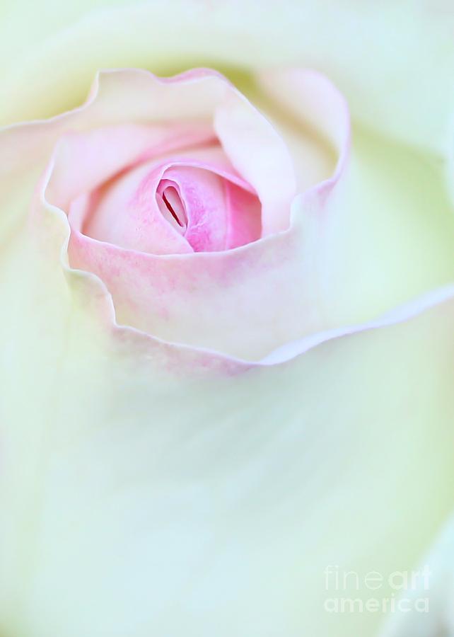 Macro Photograph - A Hint Of Pink by Sabrina L Ryan