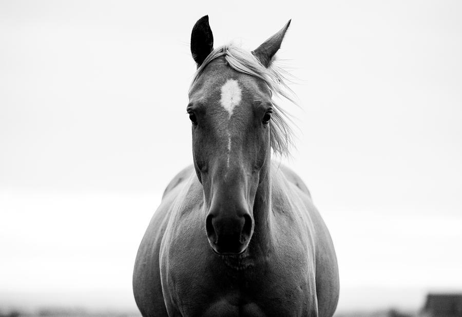 A Horse In A Field Photograph by Jordan Siemens