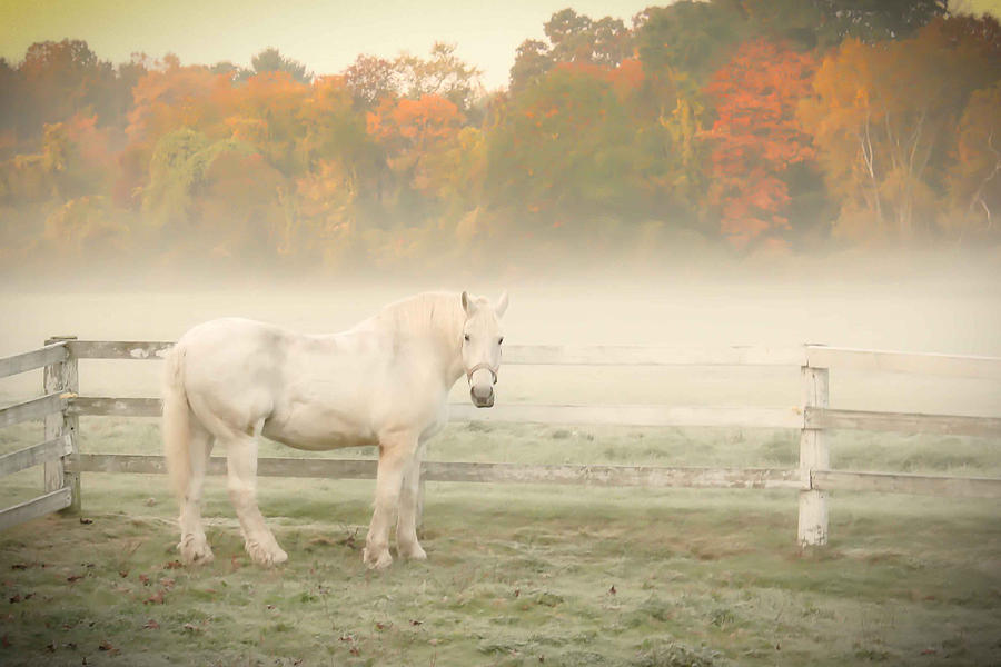 Horse Photograph - A Horse With No Name by K Hines