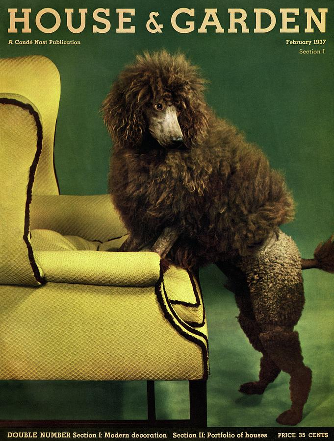 A House And Garden Cover Of A Poodle Photograph by Anton Bruehl