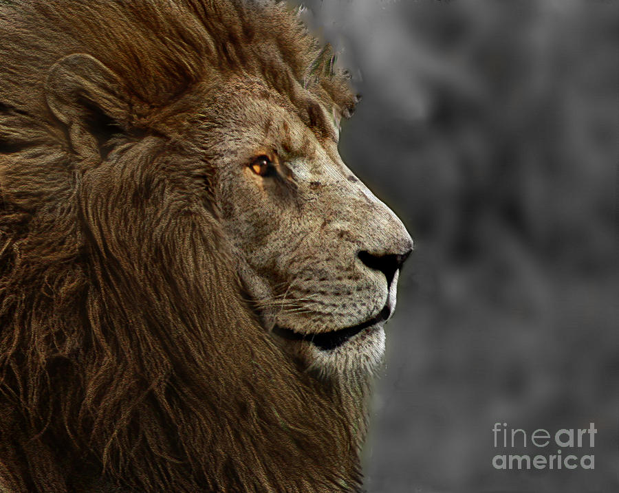 Animal Photograph - A Kings Look by Ben Yassa