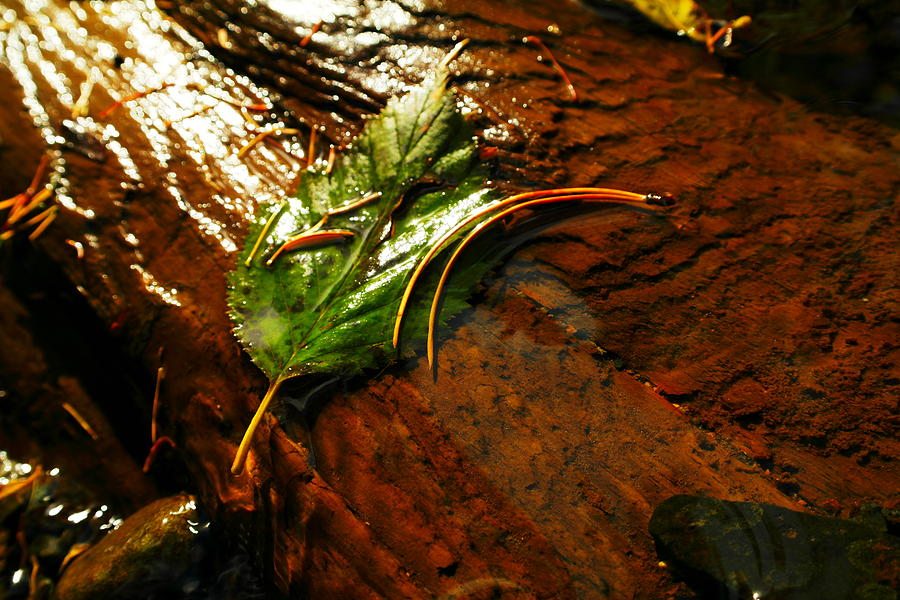 Leaves Photograph - A Leaf Washed Over by Jeff Swan