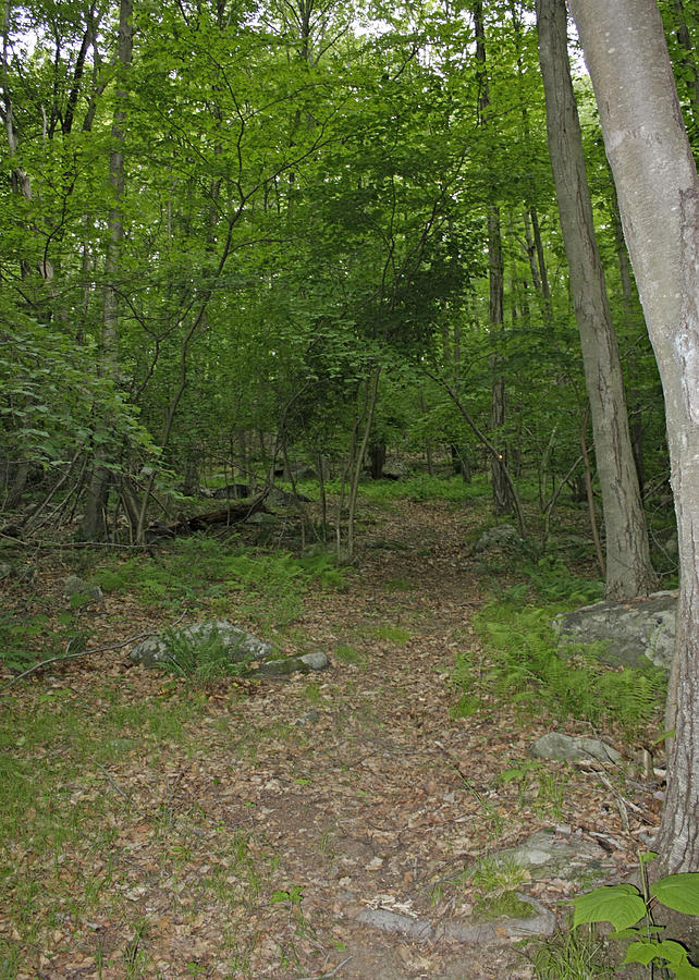 Forest Path Photograph - A Leisurely Stroll Through The Putnam County Veteran Memorial Park Woods by James Connor