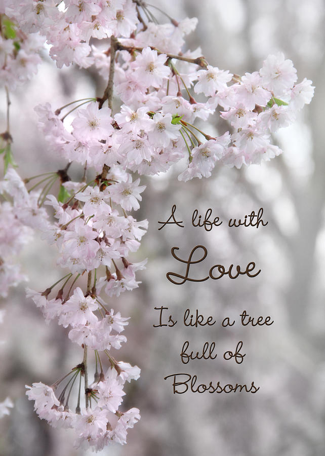 Blossom Photograph - A Life With Love by Lori Deiter