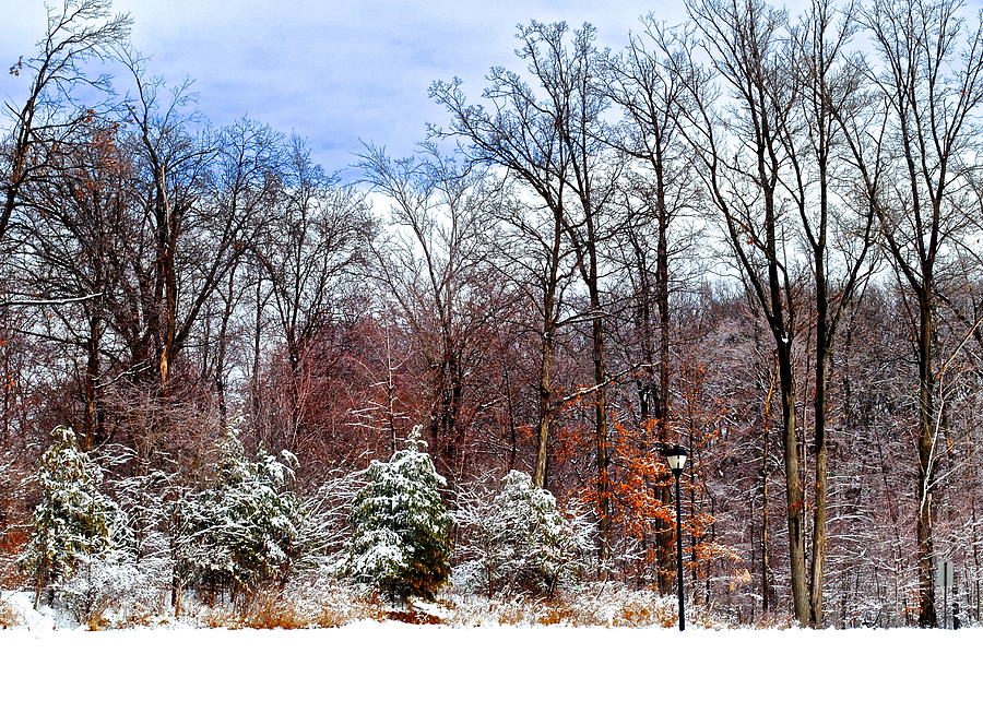 Snow Photograph - A Light Dusting by Frozen in Time Fine Art Photography