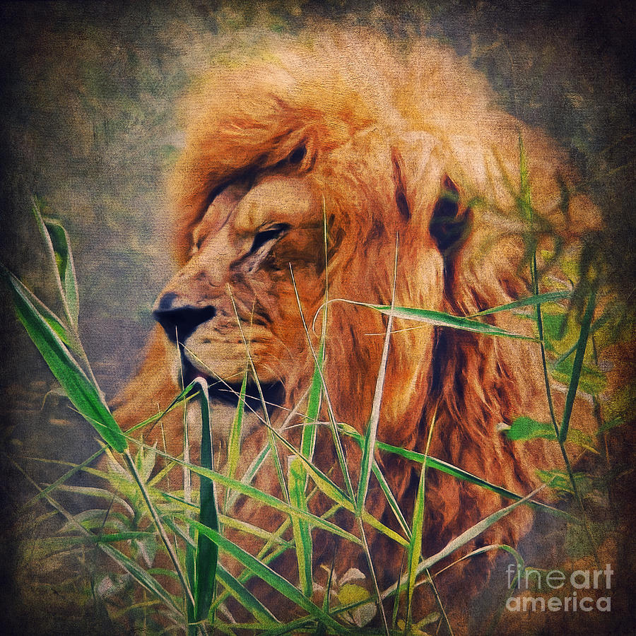 Lion Digital Art - A Lion Portrait by Angela Doelling AD DESIGN Photo and PhotoArt