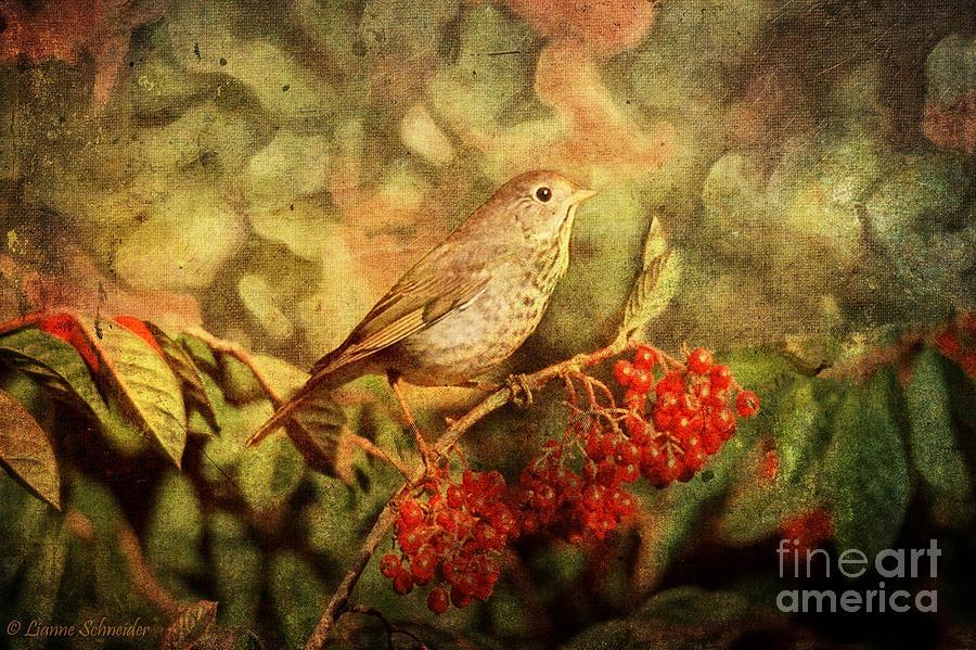 A Little Bird With Plumage Brown Digital Art