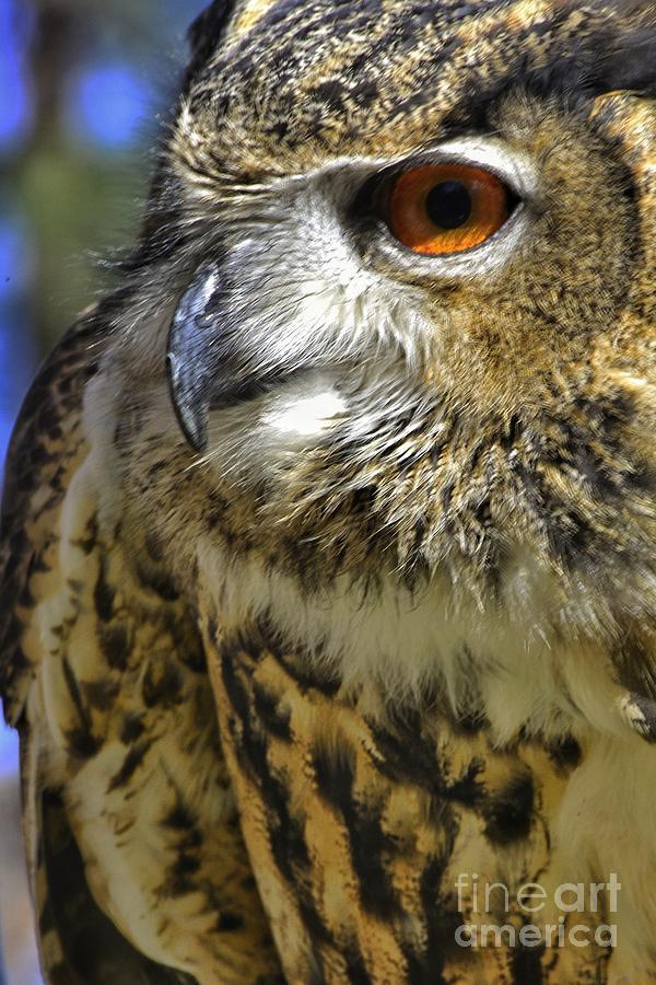 Birds Of Prey Photograph - A Little Birdie Is Watching You by George Gewinner II