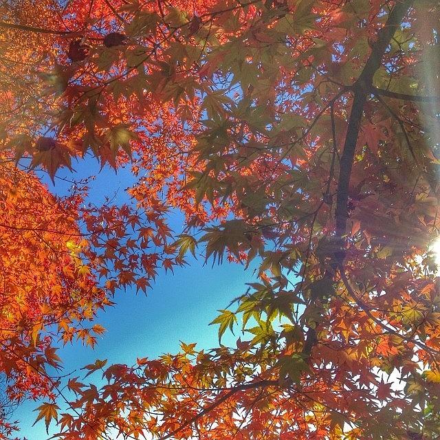Snapseed Photograph - A Little Bit Of Sunshine On A Fall by Blenda Studio
