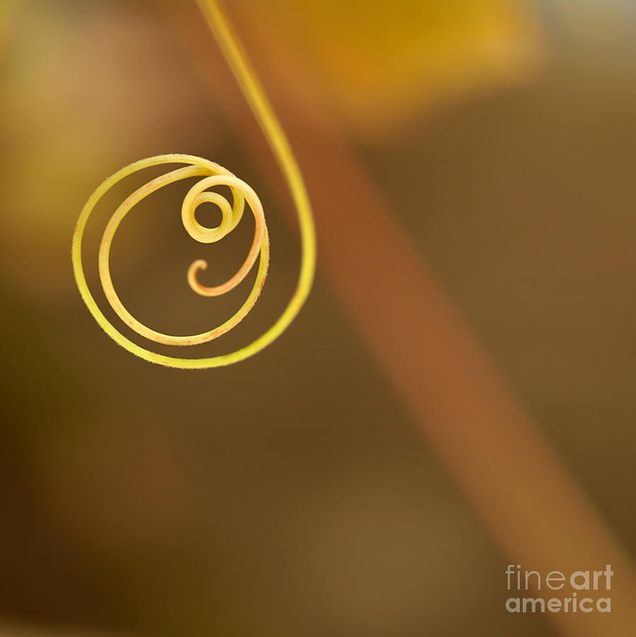 Macro Photograph - A Little Curl by Sabrina L Ryan