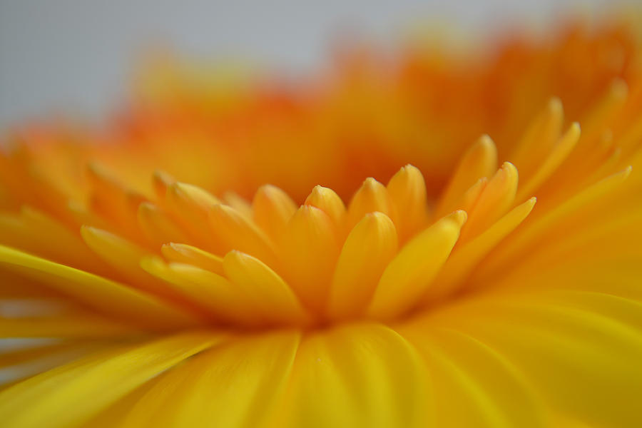 Flower Photograph - A Little Kindness by Melanie Moraga