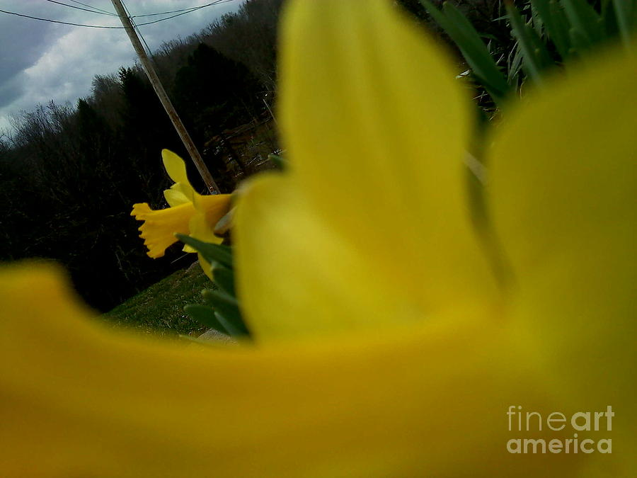 Yellow Photograph - A Little Peek by Thommy McCorkle