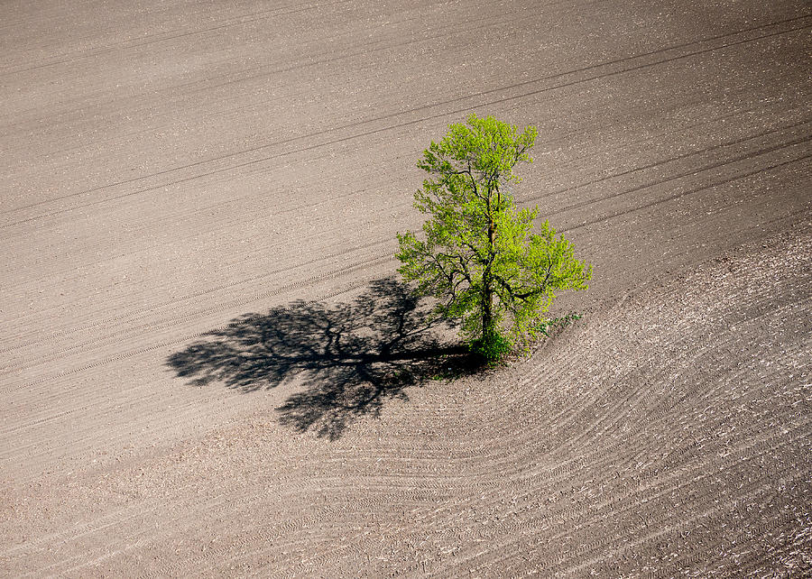 A lone tree in a newly seeded corn field. Richmond Ontario dairy farm. by Rob Huntley