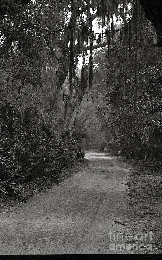 Dirt Road Photograph - A Lonely Road by Debbie Bailey