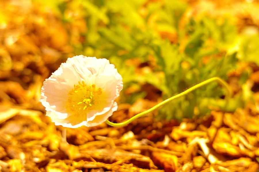 Flowers Photograph - A Long Stemmed Flower by Jeff Swan
