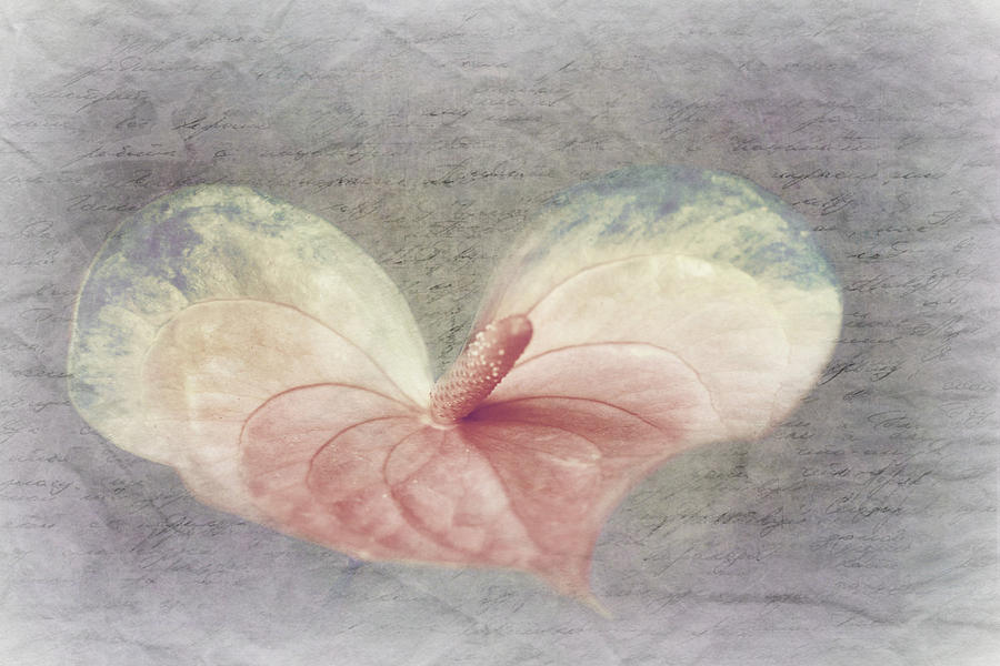 Decoration Photograph - A Love Letter by Heike Hultsch