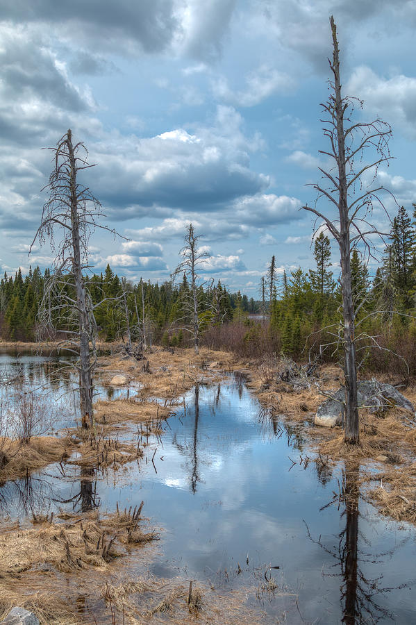 Swamp Photograph - A Lovely Swamp by Linda Ryma