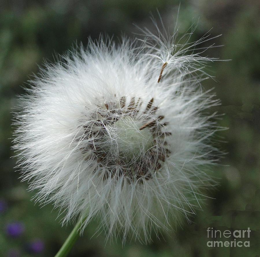 Plant Photograph - A Messenger by Ben Yassa