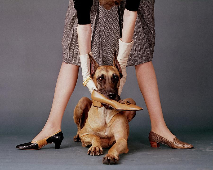 A Model With A Dog Holding A Shoe In Its Mouth Photograph by John Rawlings