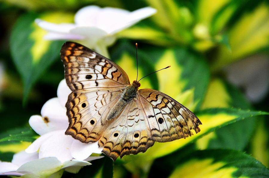Butterfly Photograph - A Moment by David Earl Johnson