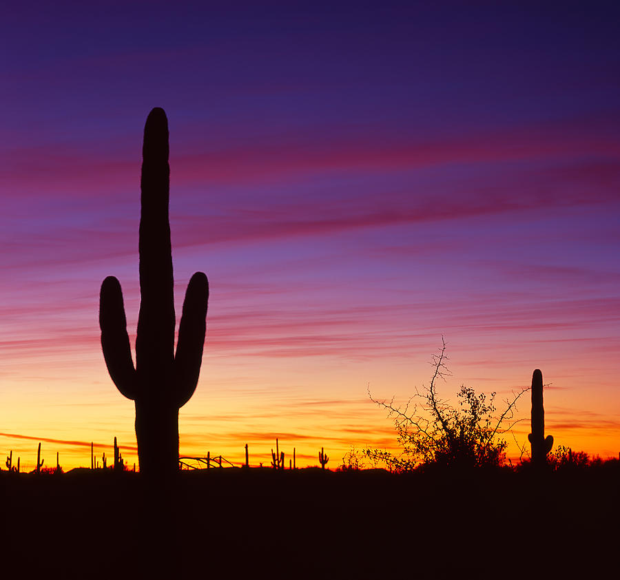Saguaro National Park Photograph - A Moment Of Color by Tony Santo