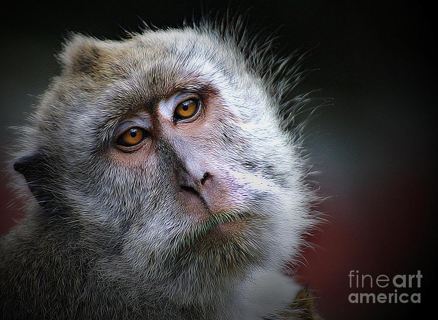 Animal Photograph - A Monkeys Look by Ben Yassa