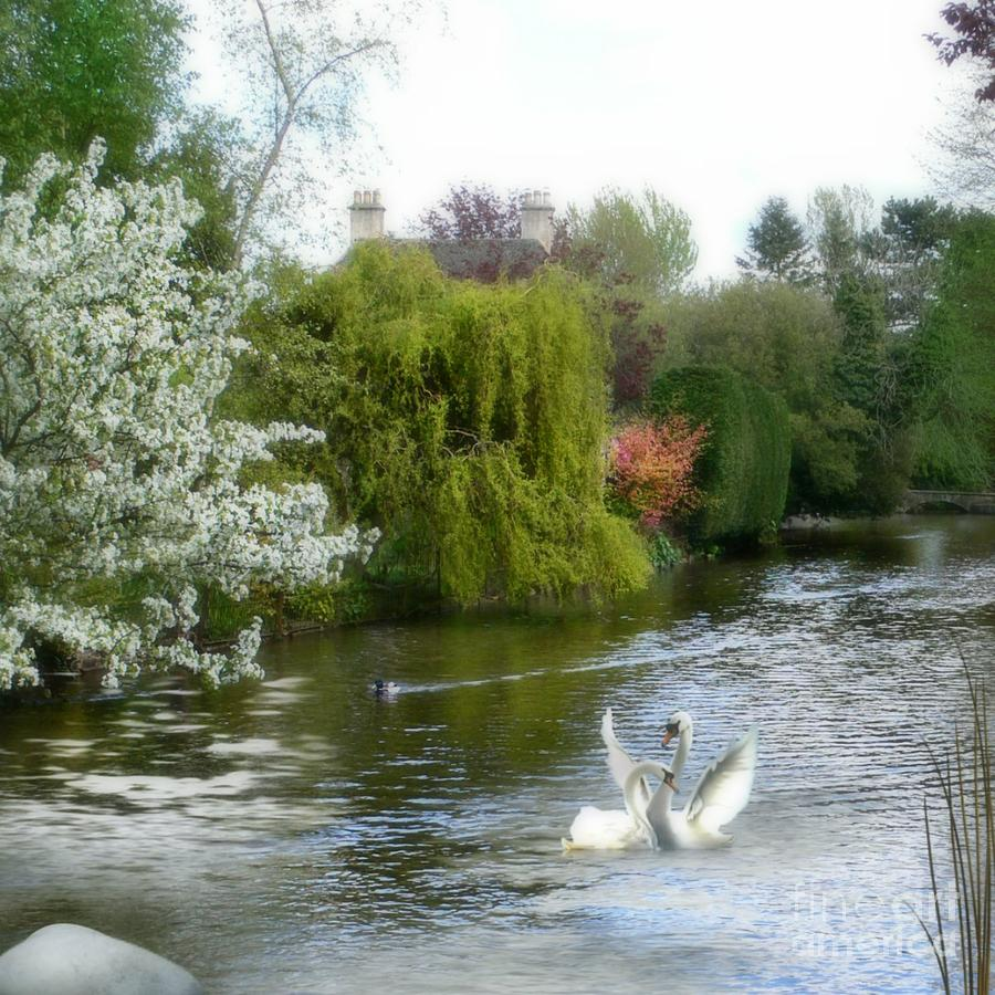 Swans Mixed Media - A Morning In Spring by Morag Bates