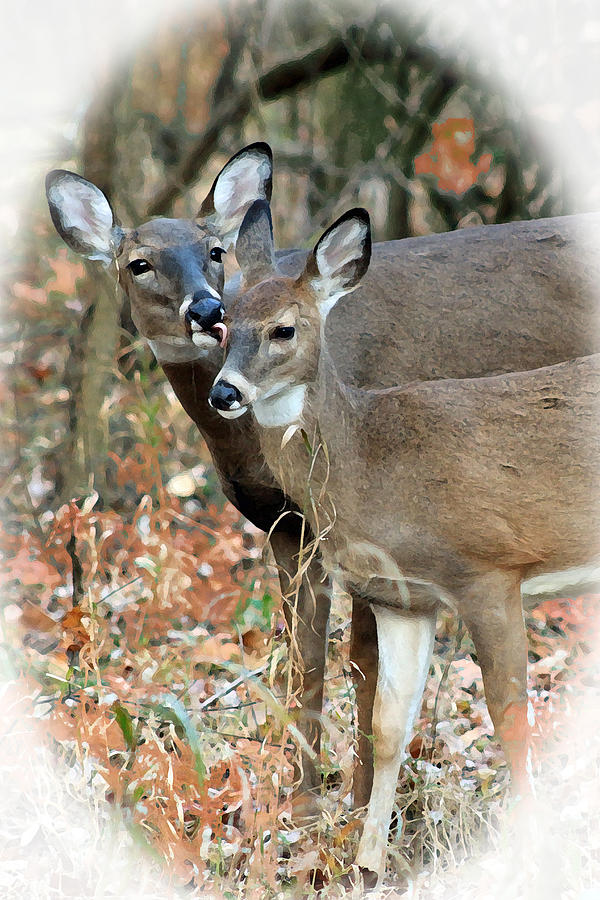 A Mother's Love by Lorna R Mills DBA  Lorna Rogers Photography