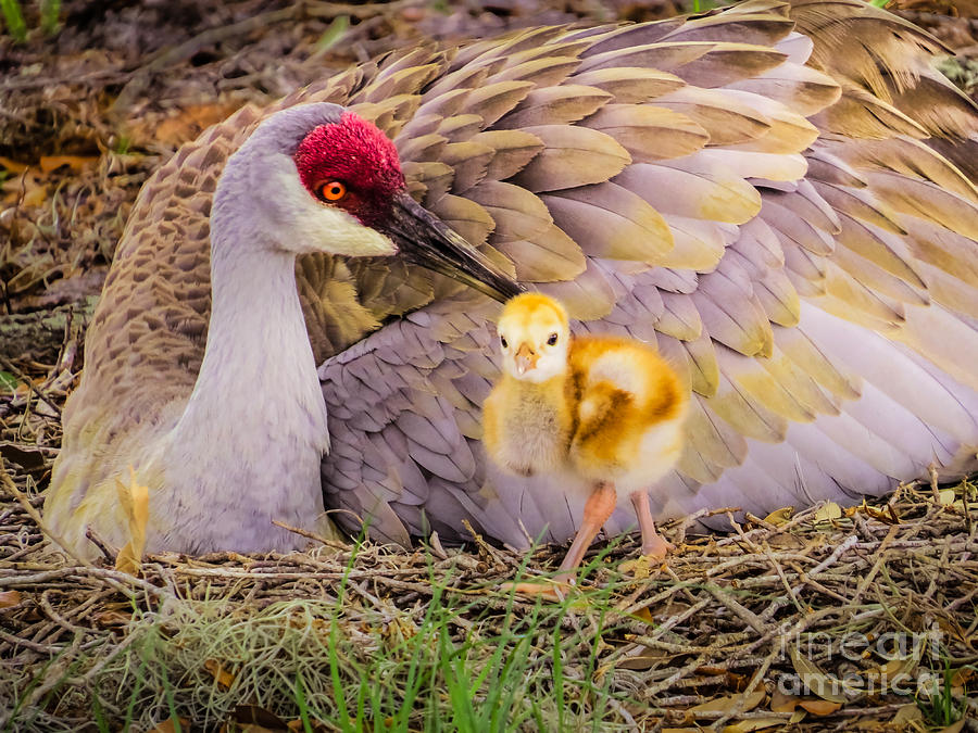 Cute Photograph - A Mothers Lovely Touch by Zina Stromberg