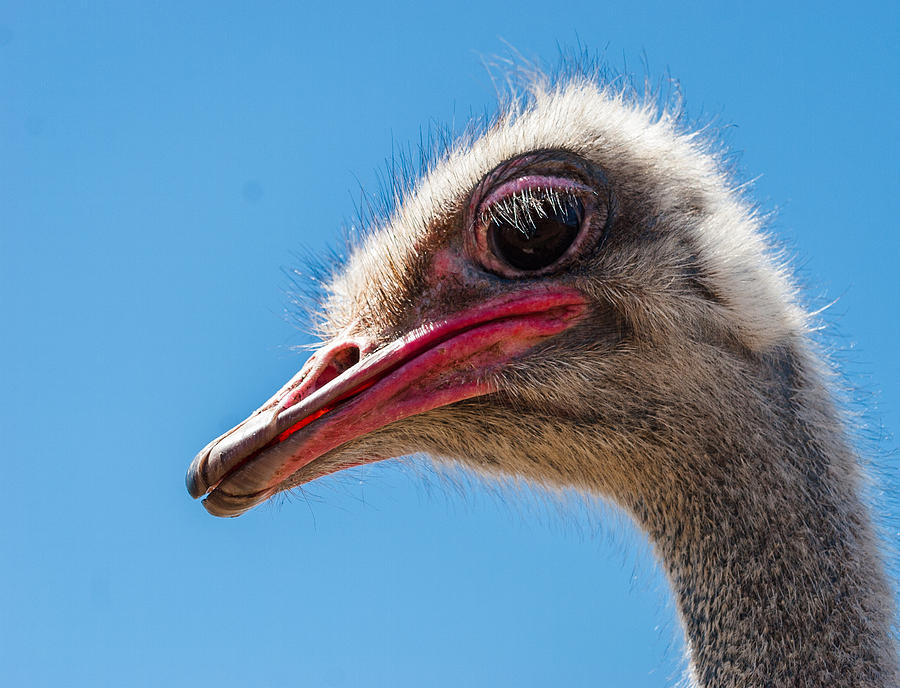 Ostrich Photograph - A Mug Only A Mother Could Love. by Jean Noren
