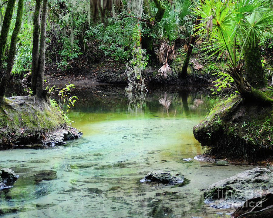 Spring Photograph - A Natural Spring by Nancy Greenland