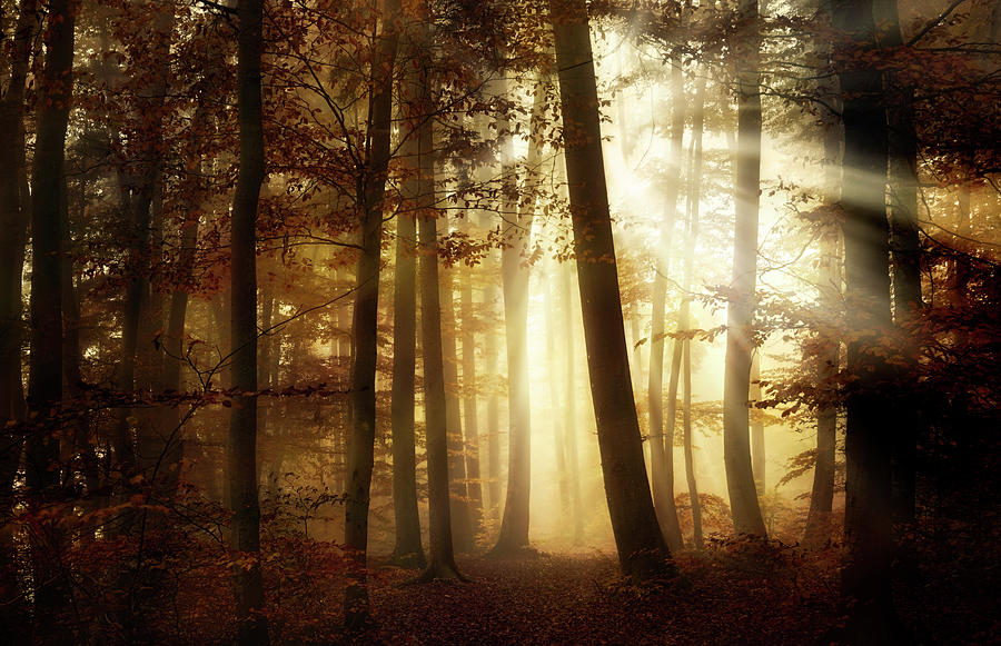 Landscape Photograph - A New Day by Norbert Maier