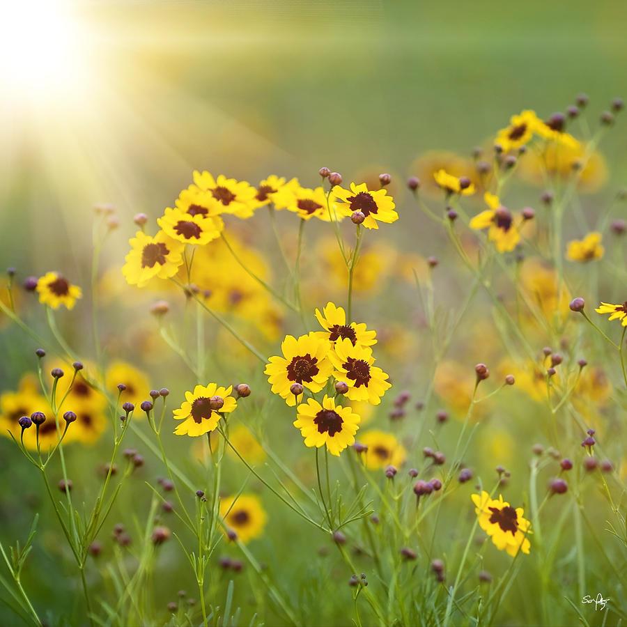Flower Photograph - A New Day by Scott Pellegrin