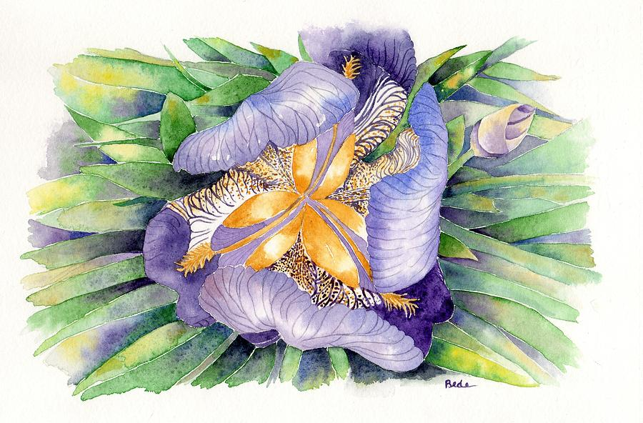 Iris Painting - A New Perspective by Catherine Bede
