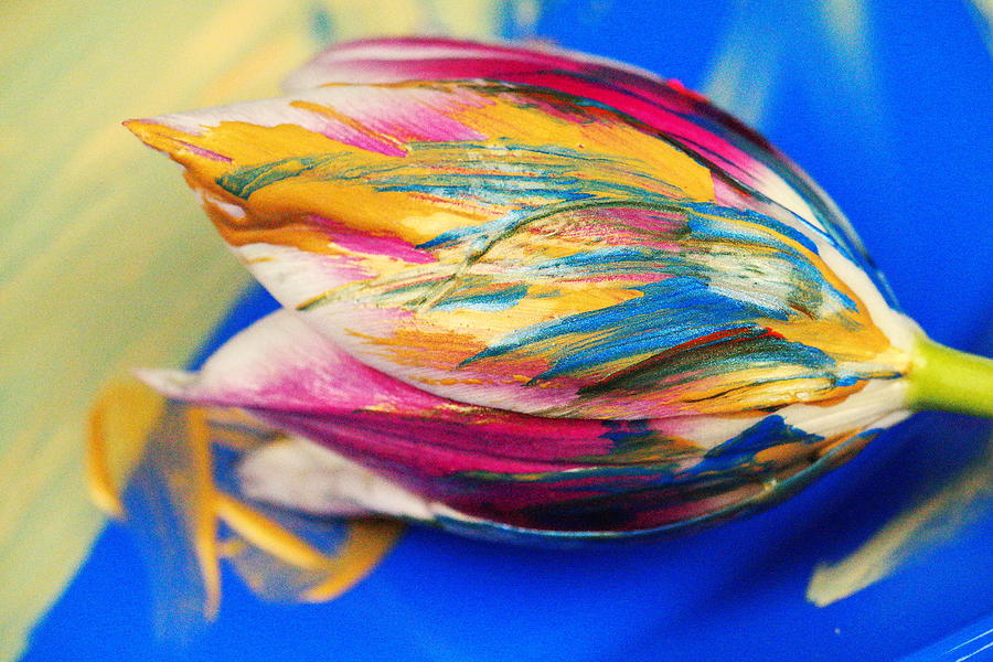 Tulip Photograph - A Painted Tulip. by Jeff Swan