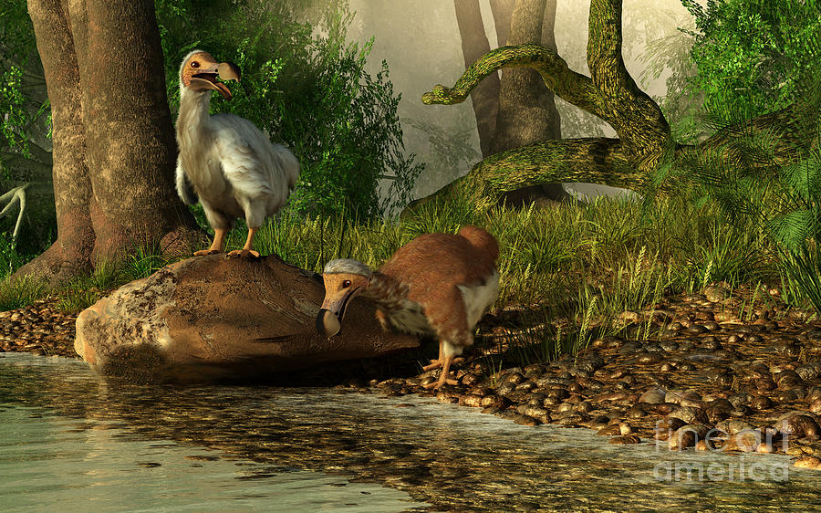 Illustration Digital Art - A Pair Of Dodo Birds Drinking by Daniel Eskridge