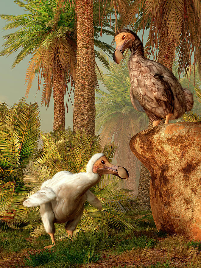A Pair Of Dodo Birds Play A Game Of Digital Art by Daniel Eskridge/stocktrek Images