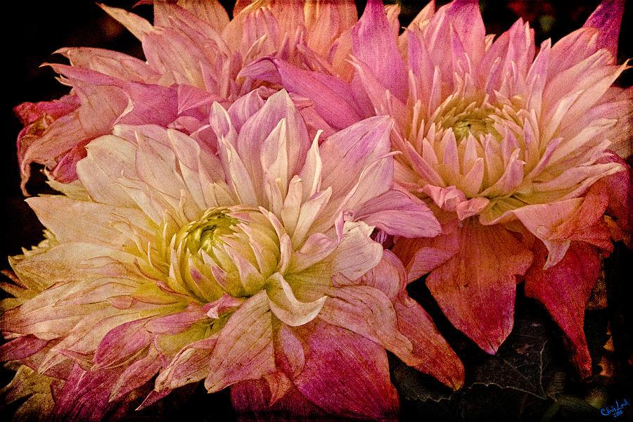 Botanical Photograph - A Pastel Bouquet by Chris Lord