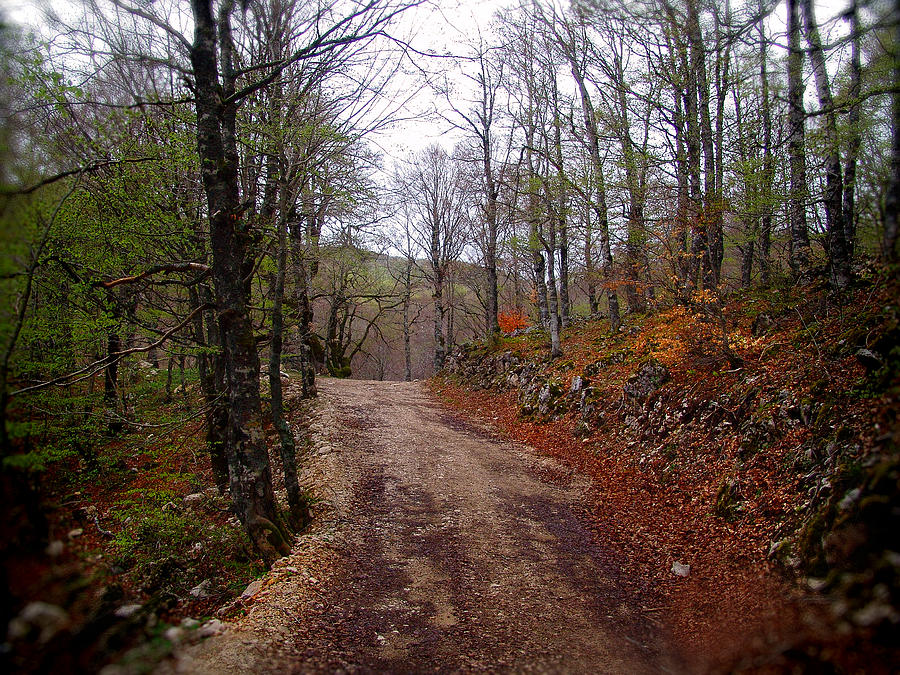 A Path In The Forest Photograph
