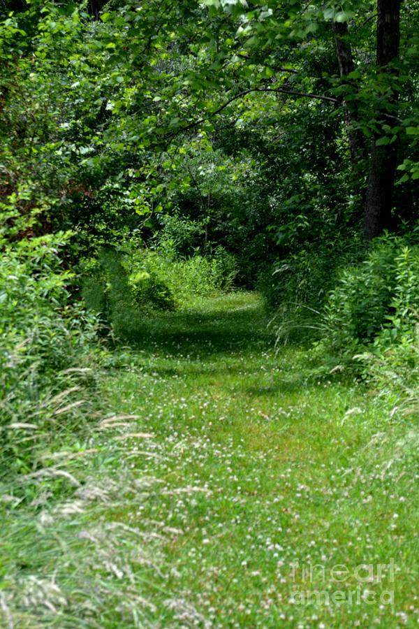 Botanical Photograph - A Path Of Clover by Eva Thomas