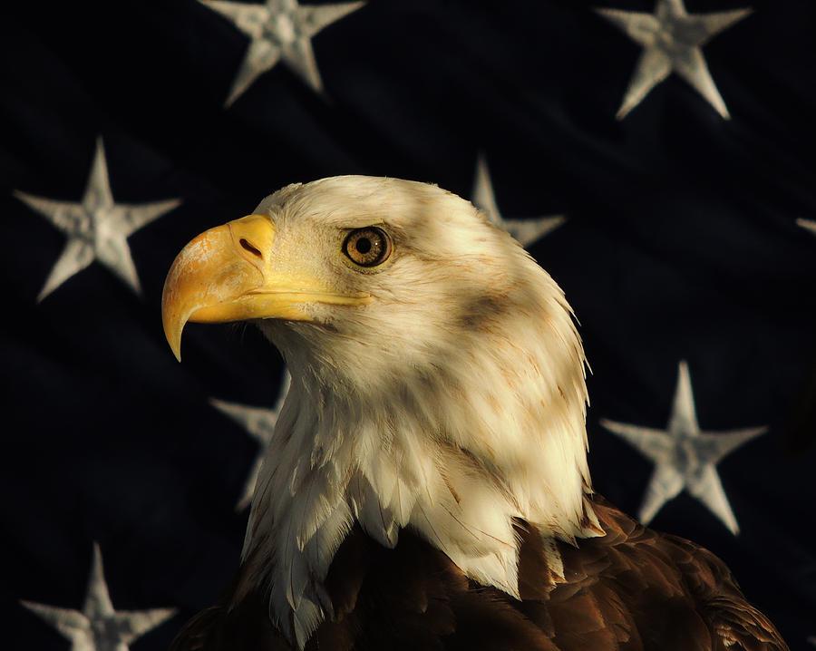 Eagle Photograph - A Patriot by Raymond Salani III