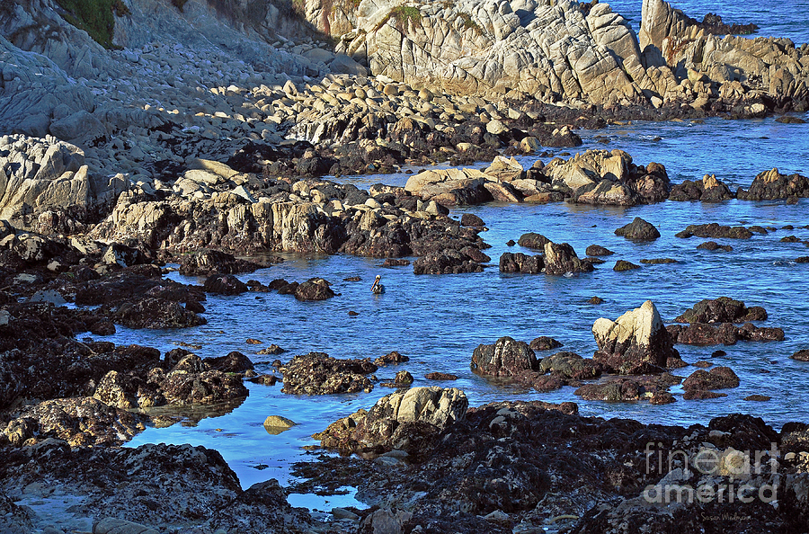 Rocks Photograph - A Pelicans Rocky Retreat by Susan Wiedmann