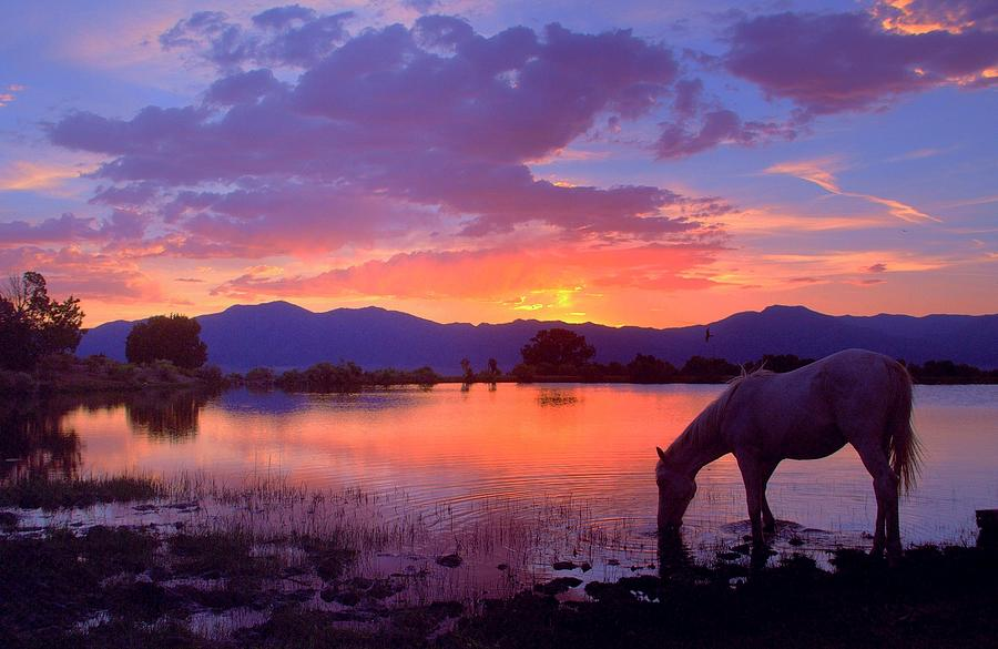 Wild Horse Photograph - A Place To Be  by Jeanne  Bencich-Nations