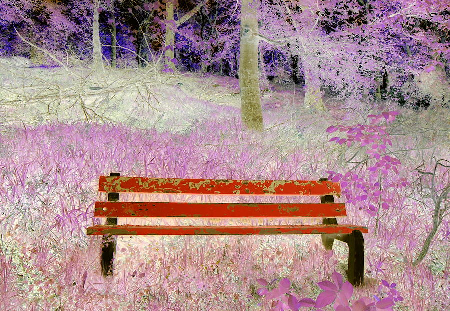 Bench Photograph - A Place To Rest by The Creative Minds Art and Photography